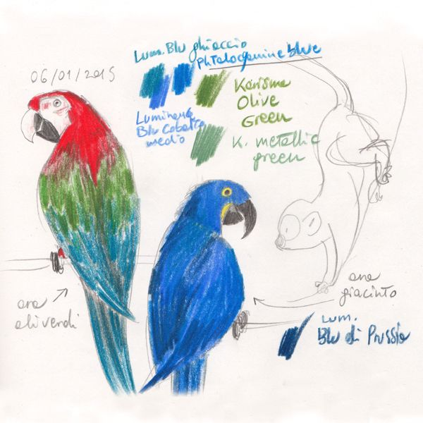 "Parrots macaw studies for ""Ciacio in Amazonia"" picture book by Sarah Khoury"