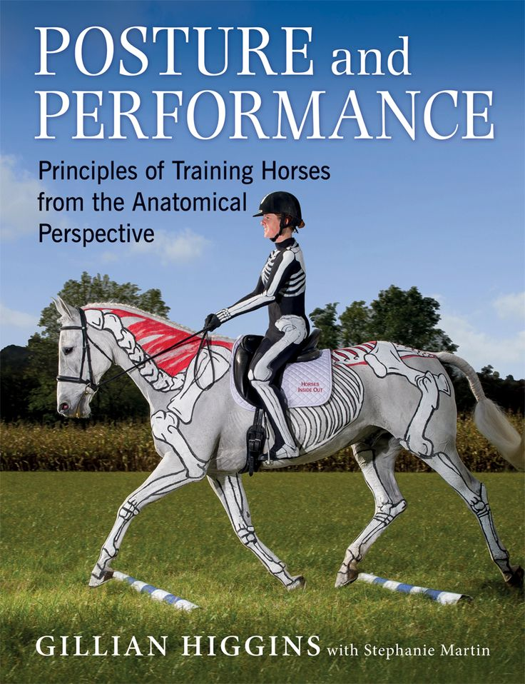 Posture and Performance by Gillian Higgins | Quiller Publishing.This book contains a wealth of practical tips and exercises broken down into easy to follow, well-illustrated steps, showing how riders can improve their riding skills and potential. #horse #riding #equestrian #performance #posture #training #equine
