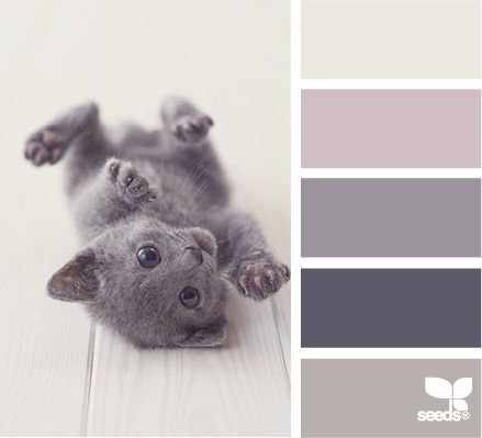 Kitten tones  love this.  I live in a country where you have grey, light grey and dark grey.  and that´s it.  I will rename my walls furry kitten grey