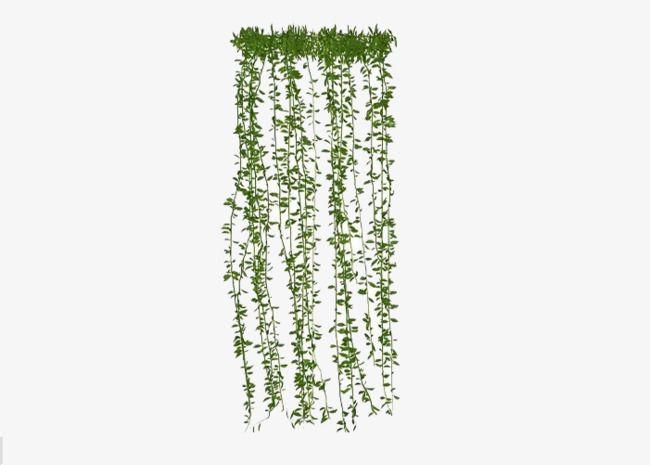 Hanging Plants Plants Clipart Plant Green Plants Png