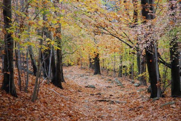 Parfum de Bois: Olores de otoño