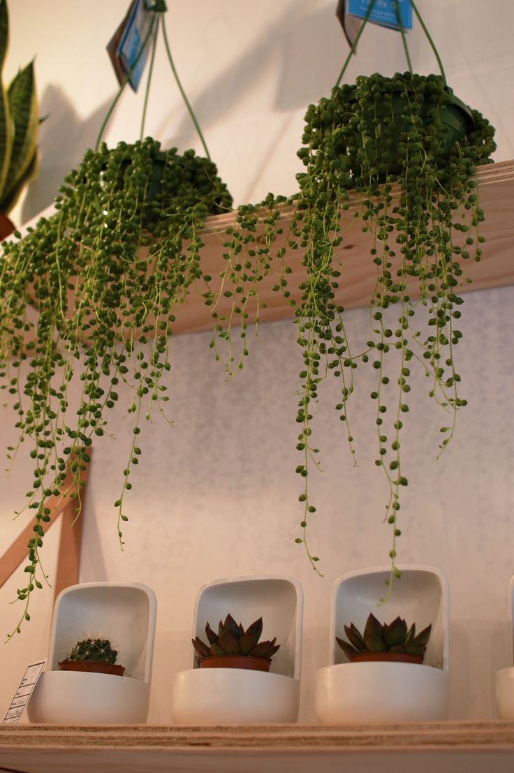 How gorgeous are these hanging string of pearls?Click through to the blog to see this amazing Manchester interiors store!