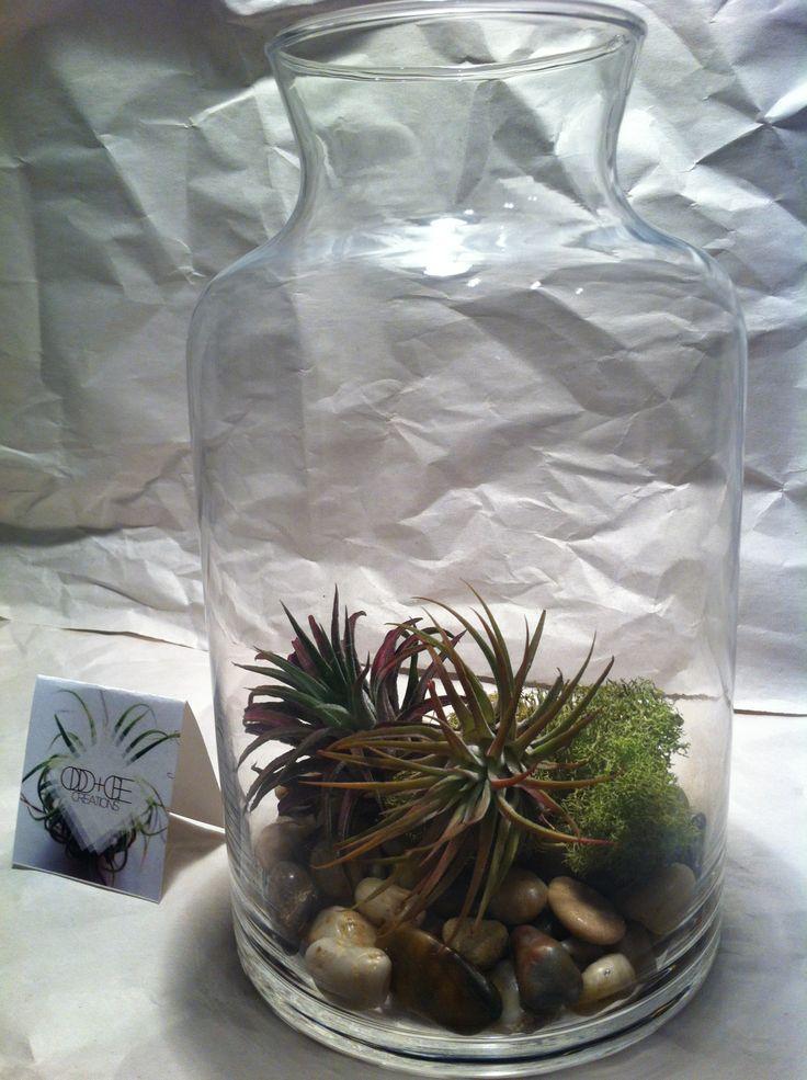 Medium Jar Terrarium - $30