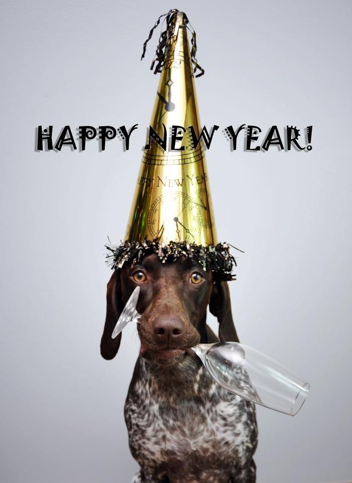German Shorthaired Pointer New Year! Bella Mae via sharon.elizabeth.photography:
