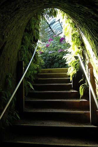 Pukekura Park Fernhouse, in Pakekura Park, New Plymouth, New Zealand - this tunnel and staircase made my childhood self believe in fairies and fantasy.