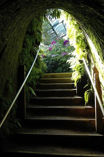 Pukekura Park Fernhouse, in Pakekura Park, New Plymouth, New Zealand - this tunnel and staircase made my childhood self believe in fairies and fantasy.