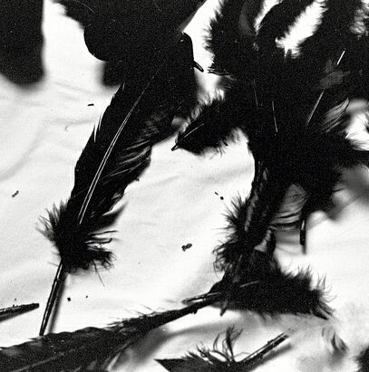 He had a heart of crow feathers. Light and unburdened but still black as night. -PM.