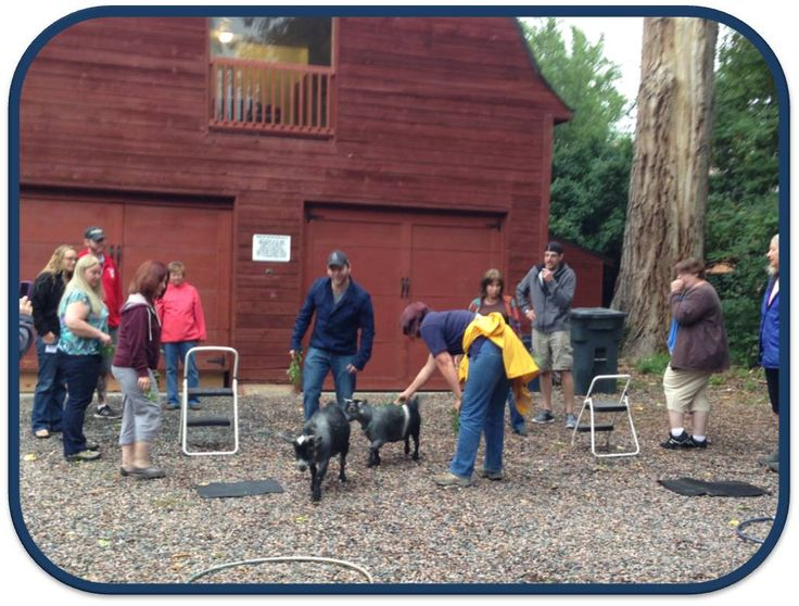 Certified Therapy Dog Training Colorado