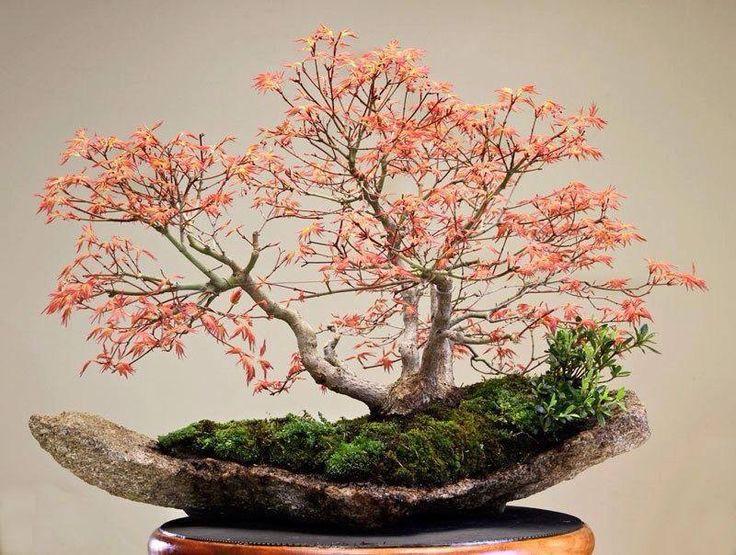 Triple trunk maple scene on handmade concrete piece w/ accent plants