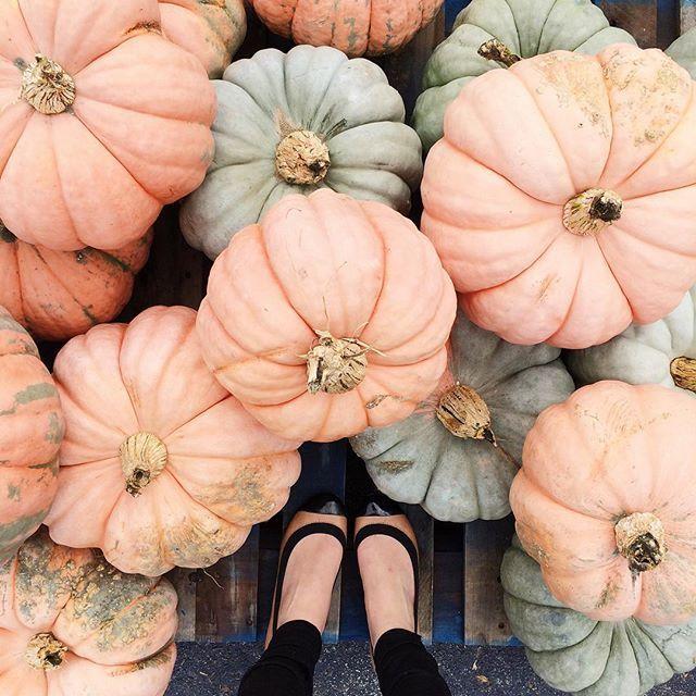 Pumpkin Season...