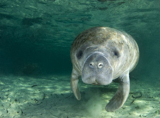 One word: manatees. | 20 Reasons Why There's Nothing Like Florida