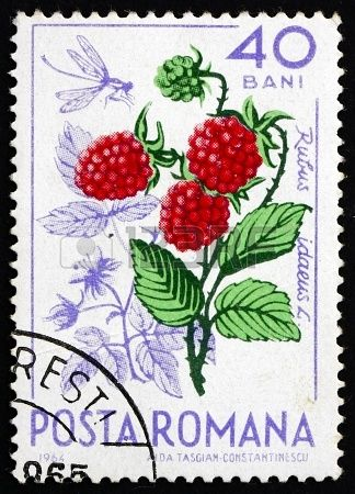 ROMANIA - CIRCA 1964: a stamp printed in the Romania shows Wild Raspberries, red Raspberry, Rubus Idaeus, Natural Fruit, circa 1964