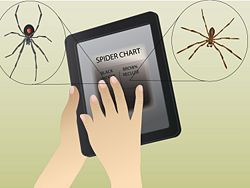 Treat Spider Bites - wikiHow