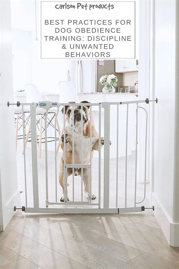 Dog Training Collar Rechargeable 2 Collars Dog Training Videos