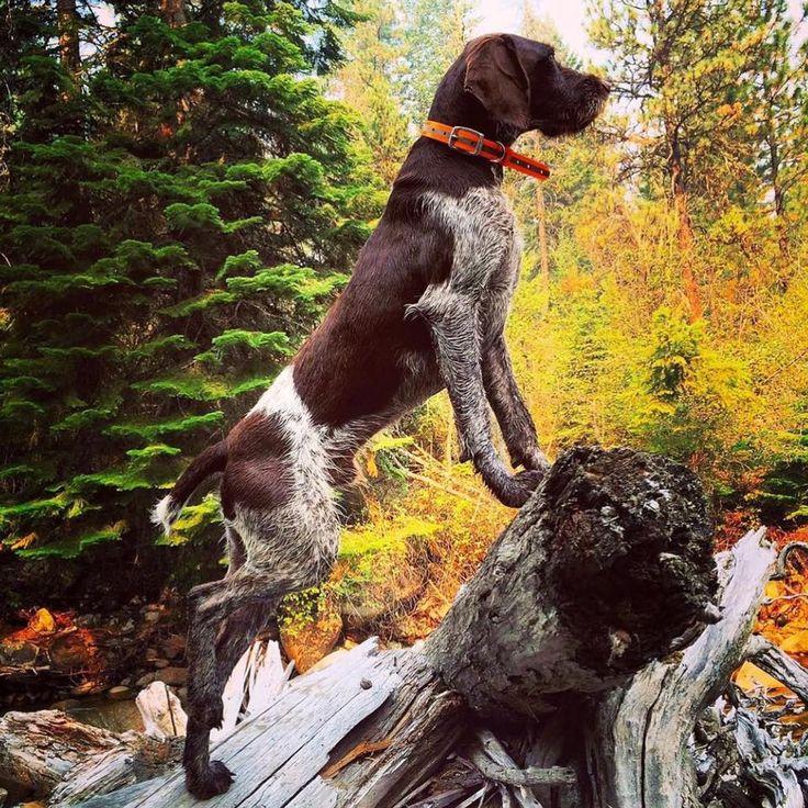 Best Paw Forward Dog Training Hayes