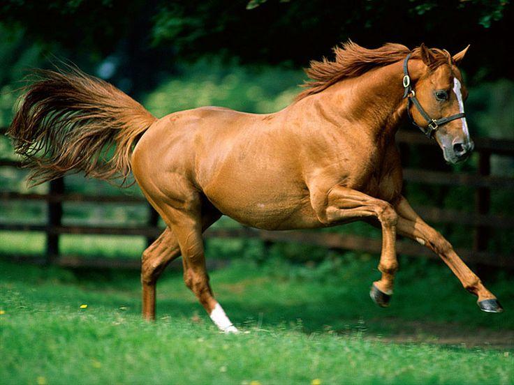 Yellow Colored Horse.  Sárga ló.