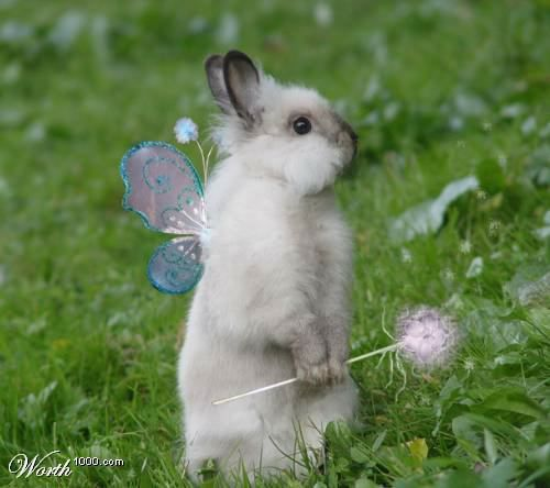 Fairy bunny.  I just couldn't resist pinning this.  :): Magic Bunnies, Dreams Home, Fairies Bunnies, Easter Bunnies, Fairies Rabbit, Magic Wands, Bunnies Fairies, Animal, Dreams Yard