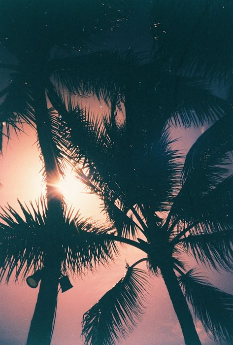 love the palms