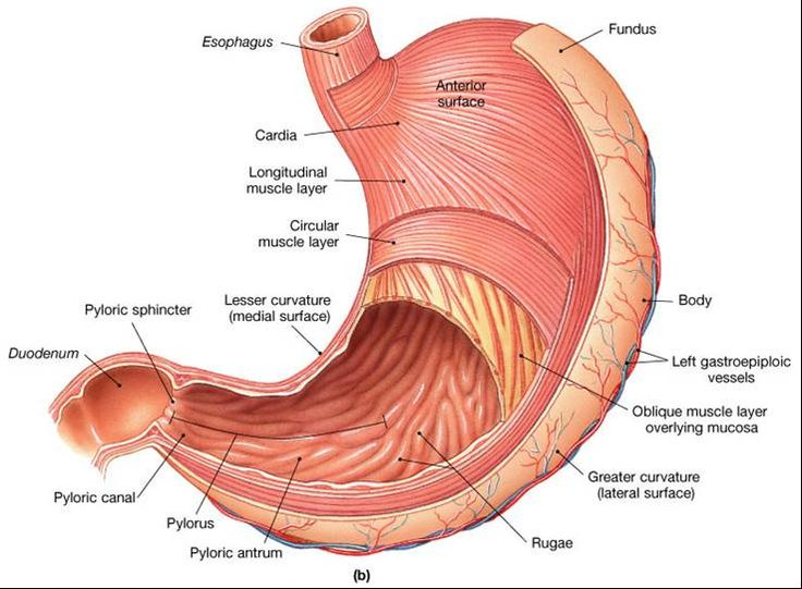 7 Best Images About Anatomy On Pinterest