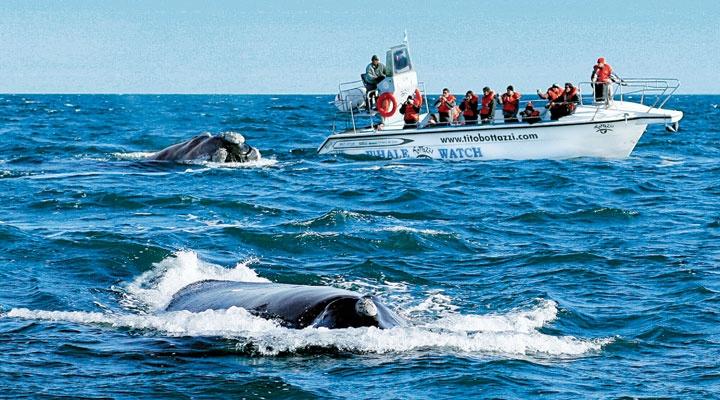 Puerto Madryn ( Argentina, Provincia de Chubut )