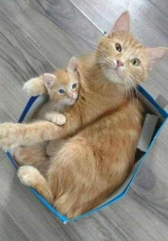 Best Mom And Kitten Images On Pinterest Kittens - 20 adorable photos proving that children really need a cat in their life