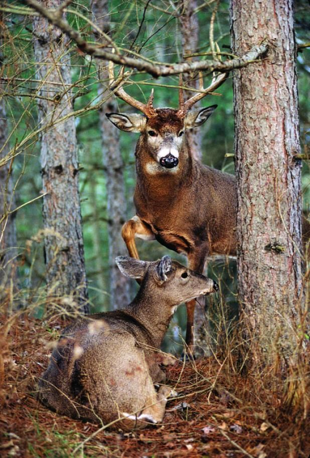 The Ultimate Deer Hunting IQ Test Part III: How to Hunt The Rut | Field & Stream