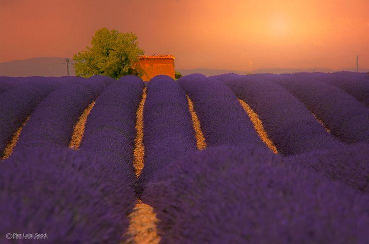 Sunset on Lavender by Pier Luigi Saddi on 500px