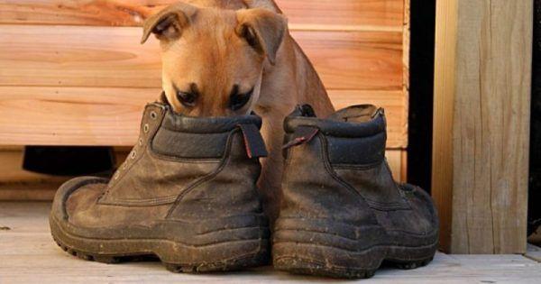 >Ακόμα και με τα μάτια… δεμένα, όλοι μπορούν να καταλάβουν πότε εισέρχονται στο δωμάτιο/χώρο όπου αποθηκεύονται παπούτσια, τα οποία χρησιμοποιούνται καθ