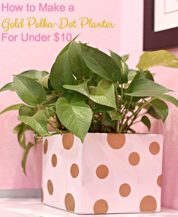 How to Make a Gold Polka~Dot Planter For Under $10