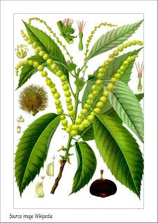 Chestnut Tree Nursery Belvedere Ofsted Thenurseries