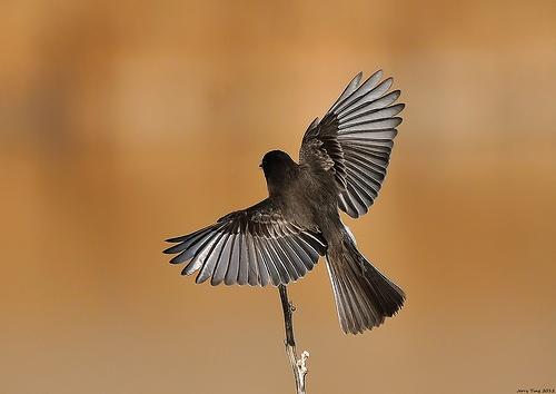 9 best birds images on pinterest beautiful birds exotic birds and little birds. Black Bedroom Furniture Sets. Home Design Ideas