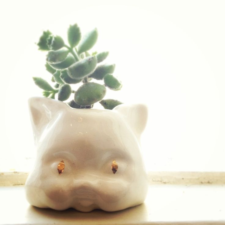 Handmade ceramic Creepy Cat Planter with gold luster eyes and Katvoetjie succulent. Exclusive to Feral Goods.