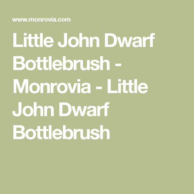 Little John Dwarf Bottlebrush - Monrovia - Little John Dwarf Bottlebrush