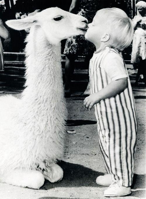 Little boy Kisses a llama at the Oakland Baby Zoo, California. 1970 | via tumblr