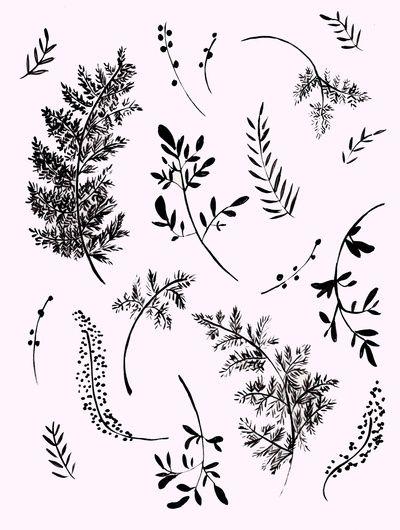 FERNS Art Print by Shannon Kirsten