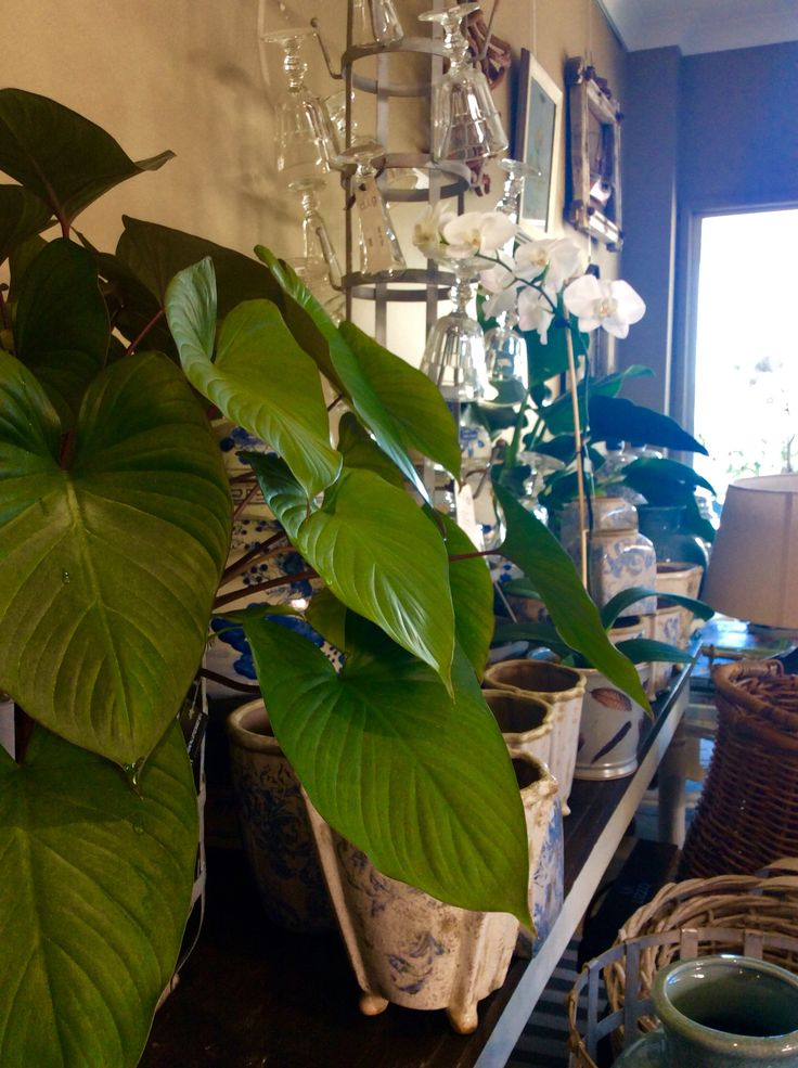 A variety of our indoor plants available at the moment ! They really bring life and colour to any room