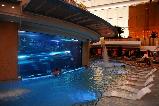 Acquarium and pool slide at golden nugget in Las Vegas. How cool would this be to slide past sharks by LinksmanJD, via Flickr