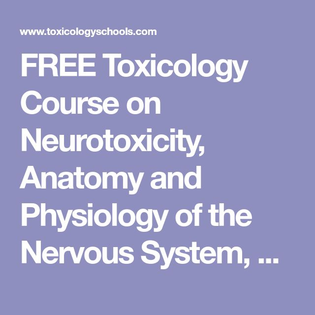The 25 best anatomy and physiology courses ideas on pinterest free toxicology course on neurotoxicity anatomy and physiology of the nervous system cells of fandeluxe Images