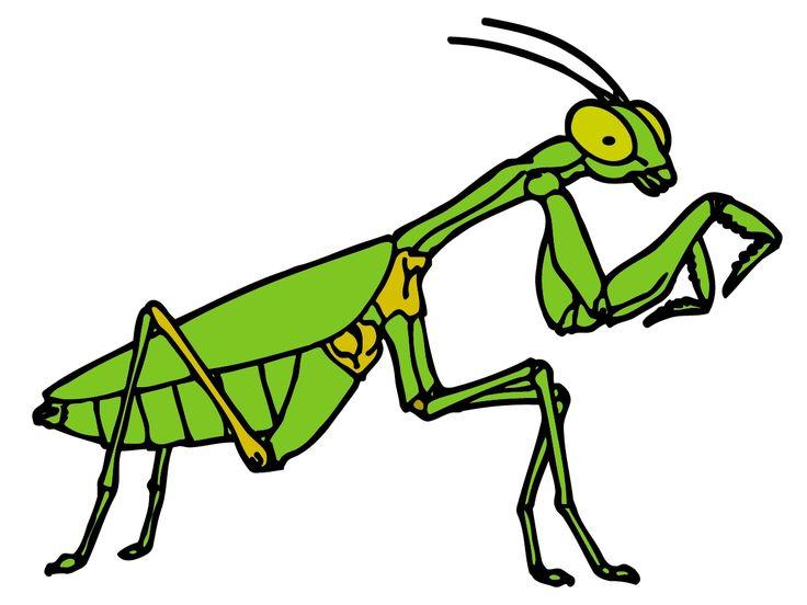 17 besten Insects Bilder auf Pinterest | Insekten, Bemalte steine ...