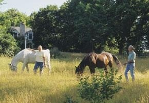 5 tips for leasing a horse