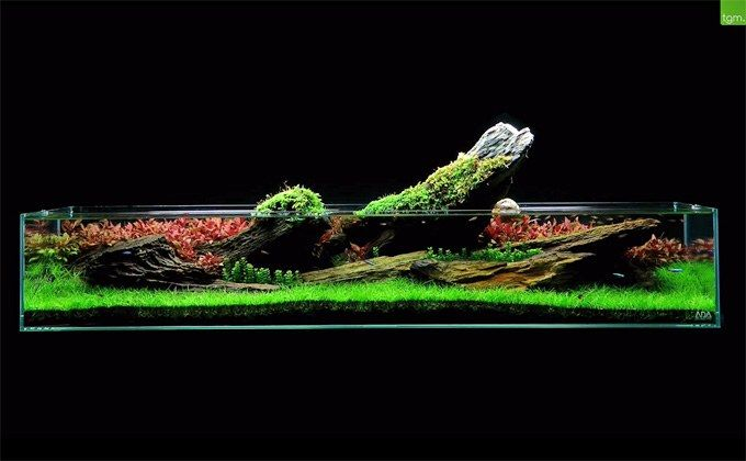 The Green Machine is a UK aquarium shop specializing in planted aquariums.