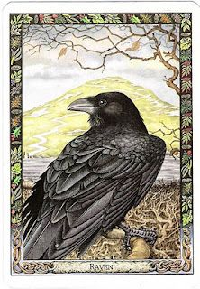 from the Druid Animals Tarot Deck by Carr-Gomm Raven, Bran, druid; animal; tarot; healing; protection; initiation;