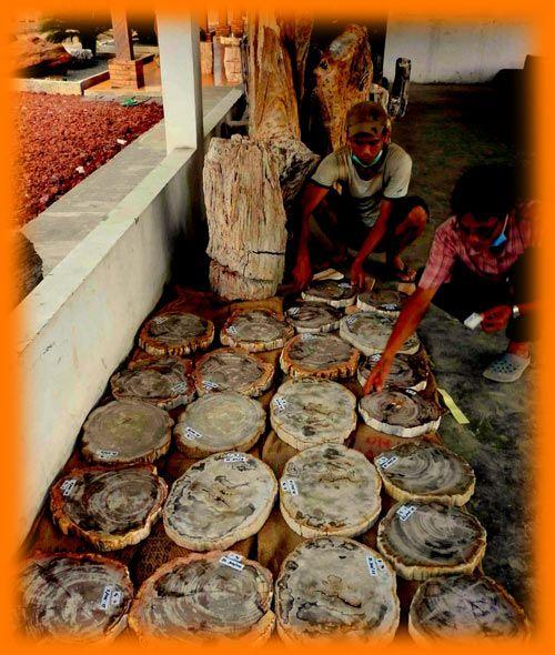 IndoGemstone Petrified Wood Trays