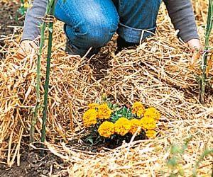 17 meilleures id es propos de tonte pelouse sur for Au jardin conseil