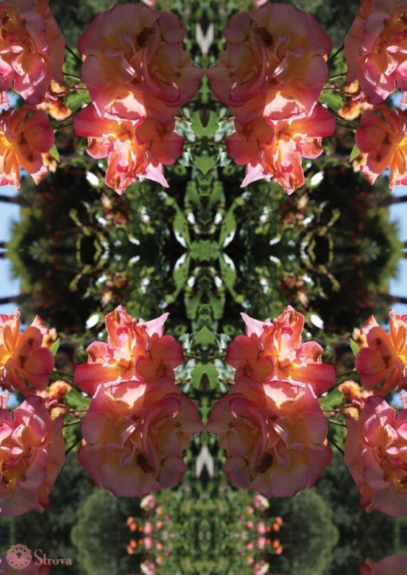 Ströva -Peach Burnt Roses