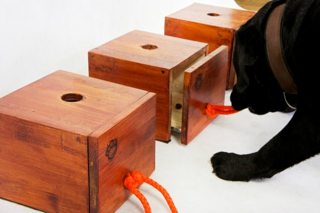 Our magic boxes helping dogs to develop their intellectual skills :)