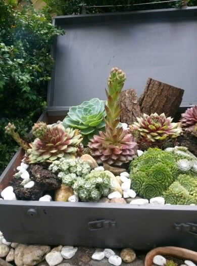 Alter Koffer bepflanzt