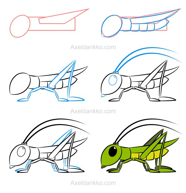 How to draw an insect (grasshopper) - Comment dessiner un insecte (sauterelle)