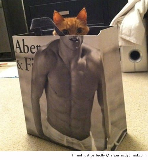 Kitty sexy and knowing it – Jumping into the bag the kitten thinks it can get buff instantly. Looks like the transformation is successful.