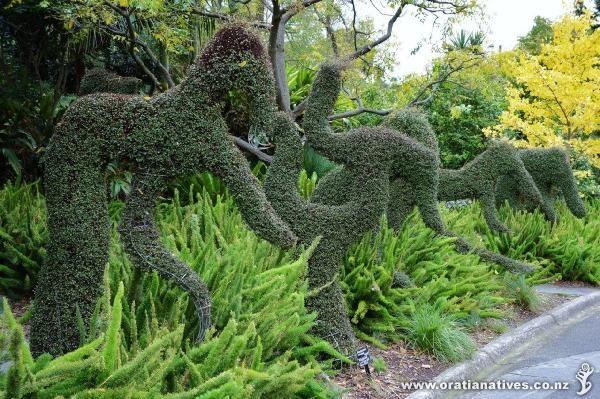 Ian Potter Foundation Children's Garden in Royal Botanic Gardens Melbourne (Sth Yarra). Muehlenbeckia complexa on garden sculptures.
